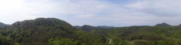 panorama_foret